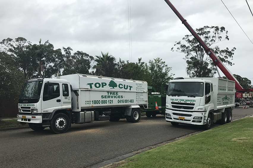 mt druitt tree removal 1