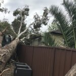 Emergency Tree Removal Sydney