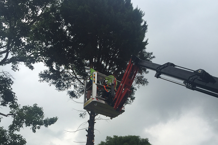 tree trimming sydney