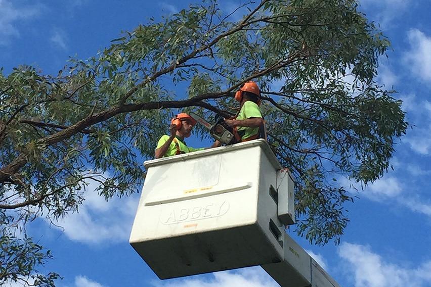 tree trimming sydney