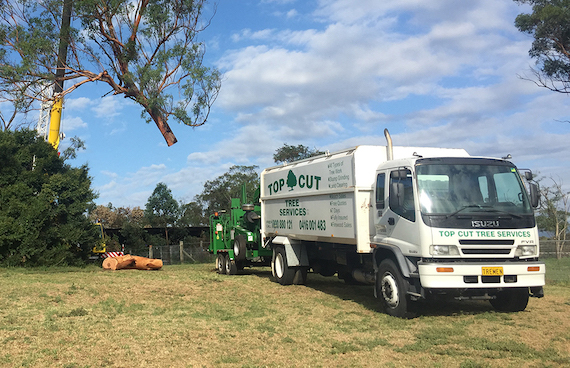 Tree removal Epping