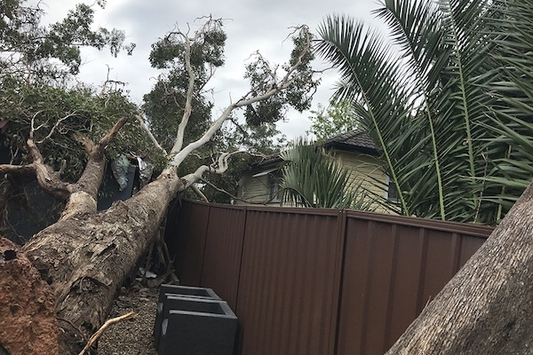 Tree removal Kurrajong
