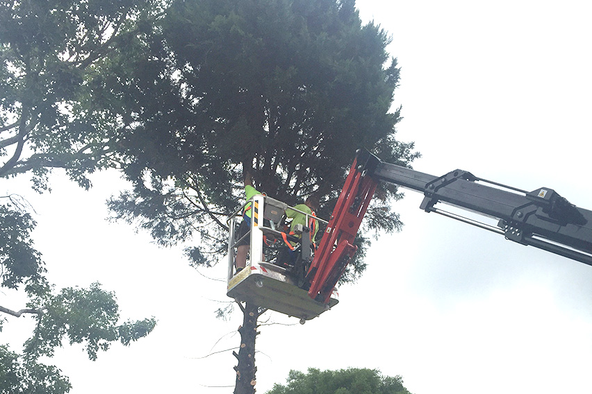 Hawkesbury tree loppers