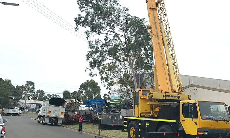 Tree removal The hills